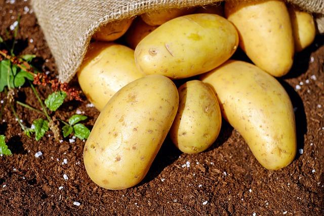 Агродрип-Приложения-картофи-капково-напояване