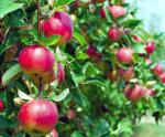 Лозарство и овощарство