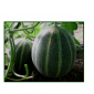 melon biser