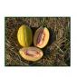 melon hibrid 1