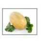 melon kehlibar