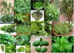 Семена - билки