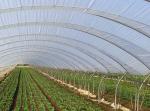 Полиетилен за оранжерии