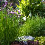 Цветарство - треви